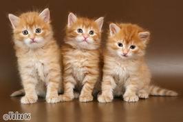фото кошек и котят разных пород с названиями